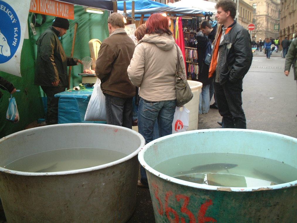 チェコのクリスマスにサンタは来ないし、イブには鯉を食べます!